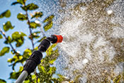 Study sheds light on pesticides-Alzheimer's link  -  Photo: ©iStock/SVproduction