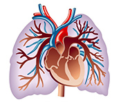 Gene therapy for heart failure -