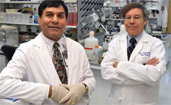Drs. Mahesh Sharma (left) and Marc Blackman are exploring ways to cut off cancer�s blood supply and thereby starve it to death.